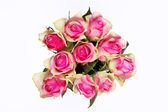 Pink roses isolated on white — Stock Photo