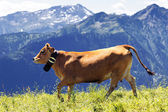 Alpine landscape and brown cow — Stock Photo