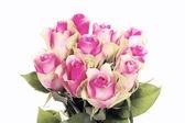 Ten pink roses — Stock Photo