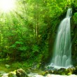Waterfall — Stock Photo #11656165