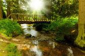 Bridge — Stock fotografie