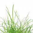 Green grass meadow — Stock Photo #11172136