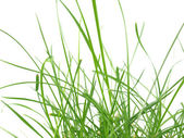 зеленая трава луг — Стоковое фото