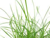 Grönt gräs äng — Stockfoto