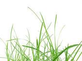 Green grass meadow — Stock Photo