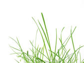 Green grass meadow — Stock Photo