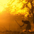 African Woman Provide Food at Dawn - Stok fotoğraf