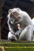 Scimmia riflessivo con un bambino — Foto Stock