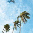 Stock Photo: Palm trees, blue sky, jet aircraft