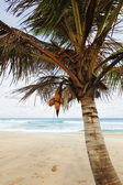 Palm tree on the beach — Stockfoto