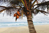 Tropical beach at low season — Stockfoto