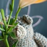 Teddy bear with flower — Stock Photo