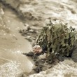 Military Camouflaged man — Stock Photo #10885970