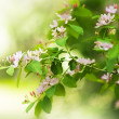 Beautiful spring blossoming tree — Stock Photo