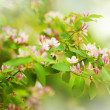 Beautiful spring blossoming tree — Stock Photo #10941457
