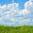Field of grass, sky with clouds — Stock Photo #10943525