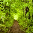 Stock Photo: Forest path