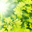 New leaf and sun ray — Stock Photo