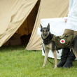 Dog rescue with medicine bag sinse world war 2 - Stock Photo