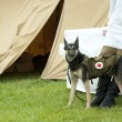Dog rescue with medicine bag sinse world war 2 — Stock Photo