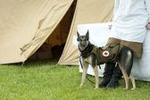 Dog rescue with medicine bag sinse world war 2 — Stock Photo
