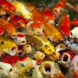 Beautiful carps - Stock Photo