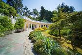 Sochi Arboretum (Dendrarium) — Stock Photo
