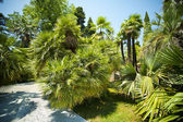 Palm-trees alley in tropical garden — Stock Photo