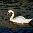 White swan floating on surface of lake — Stock Photo #12143818