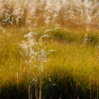 Field of grass in north mountain — Stock Photo #10775868