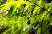 čerstvý jarní zelené vějíře listí v lese — Stock fotografie