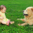 Beautiful baby girl looking on big dog sitting on green grass ou — Stock Photo