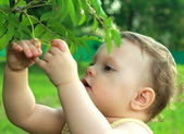 Adorable baby girl picking ash berry and looking on nature backg — Stock Photo