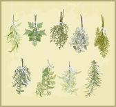 Spicy herbs. Collection of fresh herbs. Illustration spicy herbs. — Stok Vektör