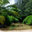 Small river mouth near Anini breach, North shore, Kauai — Stock Photo