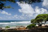 Wooden trail and pine trees near Wailua beach, East shore, Kauai — Stock Photo