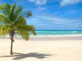 Stranden med palm tree — Stockfoto