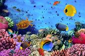 Foto van een koraal kolonie — Stockfoto