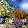 Underwater shoot of vivid coral reef with a fishes — Stock Photo #11987544