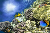 Underwater shoot of vivid coral reef with a fishes — Stock fotografie