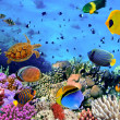 Photo of a coral colony — Stock Photo #12035418