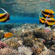 Photo of a coral colony — Stock Photo #12035441