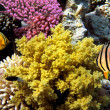 Tropical Fish on Coral Reef in the Red Sea — Stock Photo #12035466