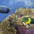 Underwater shoot of vivid coral reef with a fishes — Stock Photo #12035647