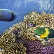 Underwater shoot of vivid coral reef with a fishes — Stock Photo