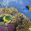 Underwater shoot of vivid coral reef with a fishes — Stock Photo #12035659