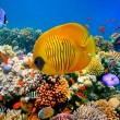Tropical Fish on a coral reef — Stock Photo #12155444