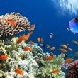 Tropical Fish on Coral Reef in Red Sea — Stok Fotoğraf #12155519