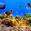 Photo of a coral colony on a reef — Stock Photo #12155596