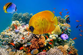 Tropical Fish on a coral reef — Stock Photo